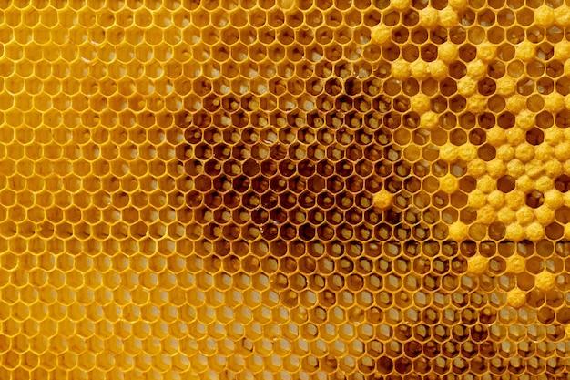 Les abeilles travaillent sur le nid d'abeille. modèle de cellules de miel.