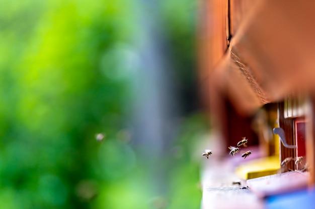 Abeilles volant dans la ruche du pré vert