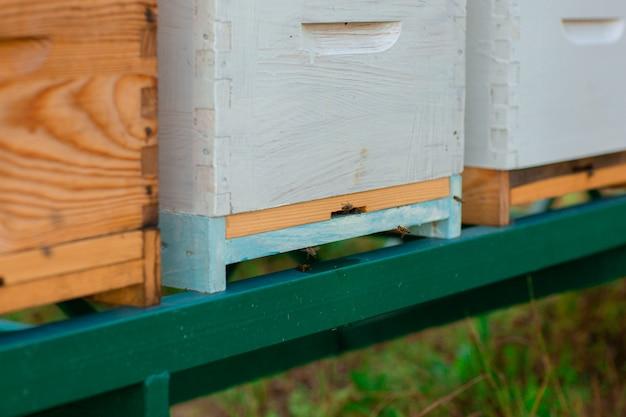 Abeilles volant près de la ruche. gros plan de l'entrée des abeilles dans une ruche colorée en bois.