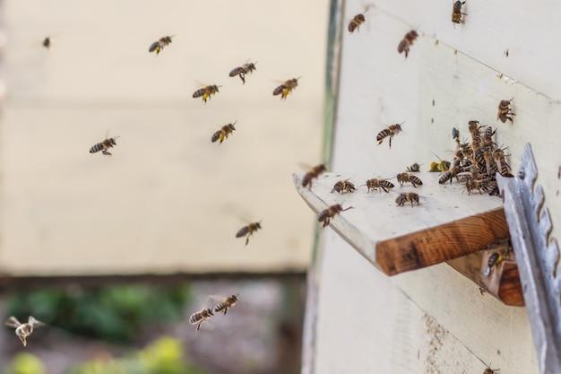 Les abeilles volent dans un gros plan de ruche