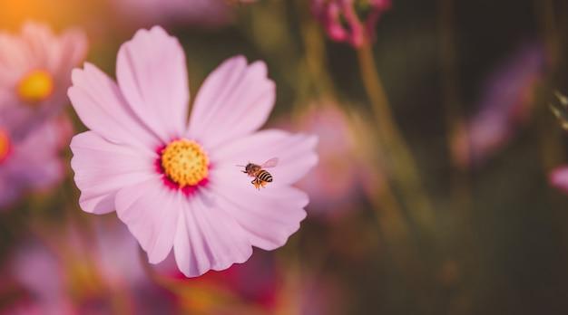 Les abeilles volent pour polliniser les fleurs