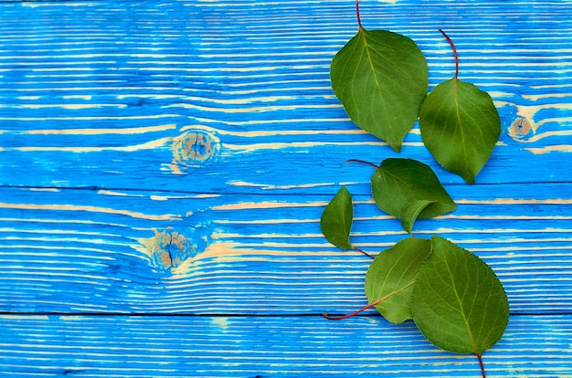 Abricots feuilles vertes sur fond bleu en bois