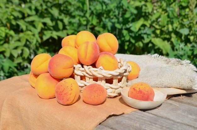 Abricots mûrs sur fond vert