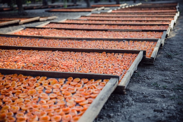 Abricots sur plusieurs plateaux