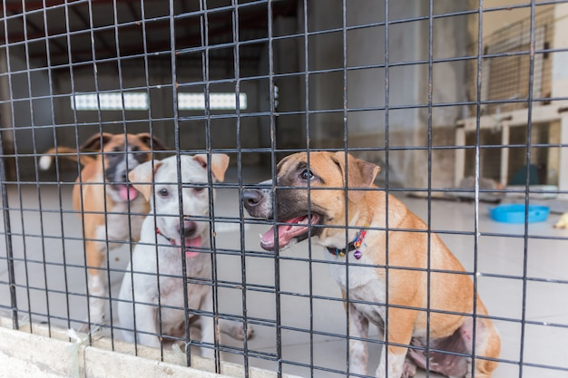Abris pour chiens sans abri, en attente d'un nouveau propriétaire