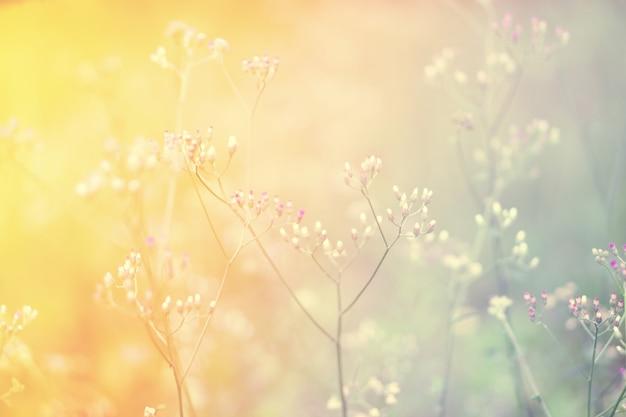 Abstarctus de flou fleur printemps, fond nature automne