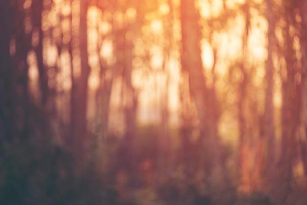 Abstrait arrière-plan flou de la forêt au coucher du soleil, des arbres et du soleil