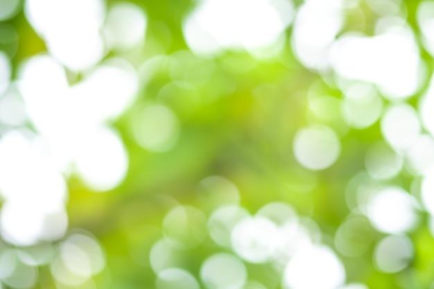 Abstrait bokeh flou fond nature arbre avec la lumière du soleil en été.