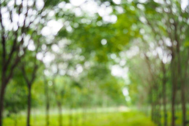 Abstrait bokeh vert hors contexte de mise au point d'arbre dans la nature