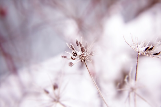 Abstrait avec des branches de fleurs de prairie sèches et de pissenlit