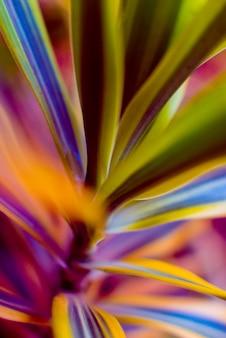 Abstrait coloré bouchent. macro.
