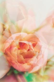 Abstrait doux de fleurs.