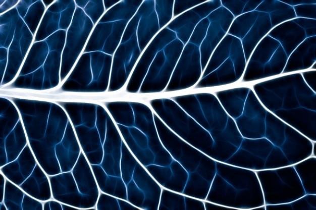 Abstrait feuille macro bleu