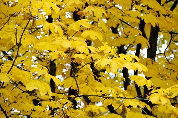 Abstrait de feuilles d'érable automne