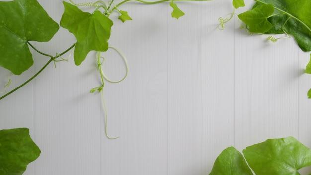 Abstrait avec des feuilles tropicales sur fond de planche blanche