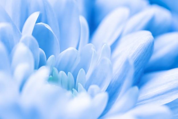 Abstrait floral fond bleu fleur de chrysanthème macro fleurs toile de fond pour la conception de marque de vacances
