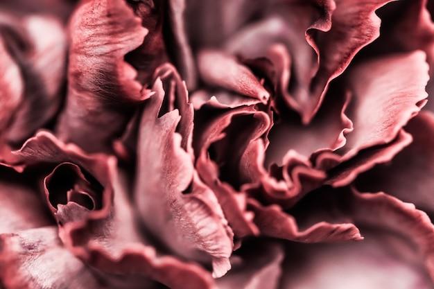 Abstrait floral fond rose oeillet fleur macro fleurs toile de fond pour la conception de la marque de vacances
