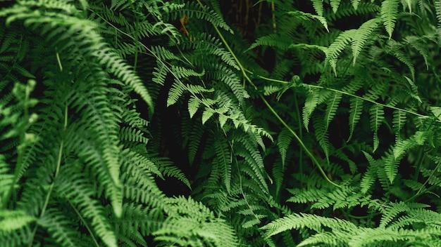 Abstrait de fougère verte. fond naturel - forêt