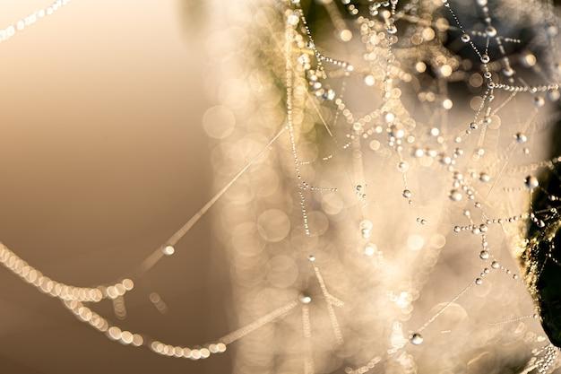 Abstrait naturel avec des gouttes de rosée de cristal sur une toile d'araignée au soleil.