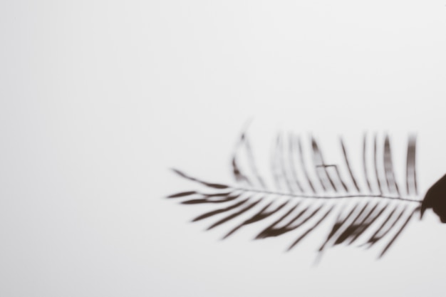 Abstrait naturel laisse ombre sur fond blanc