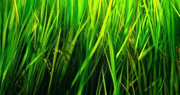 Abstrait de peinture à l'huile de feuilles vertes. fond de nature