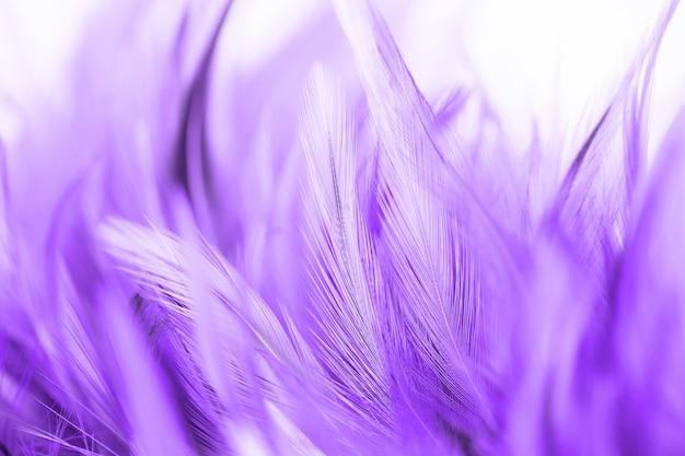 Abstrait de la texture de la belle plume de poulet violet. couleur douce et floue