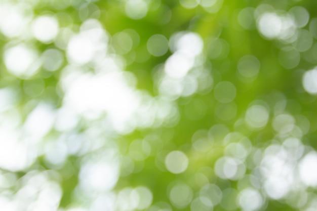 Abstrait vert bokeh naturel