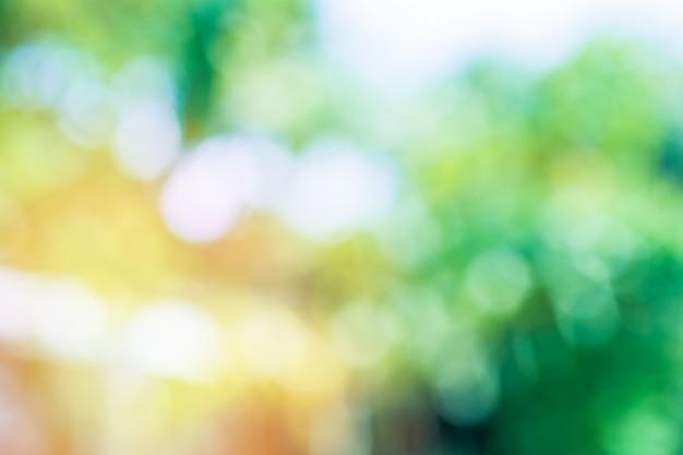 Abstrait vert / flou d'arbre vert et orange sur fond de nature et bokeh