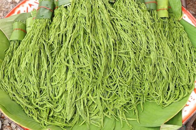 Acacia pennata au marché