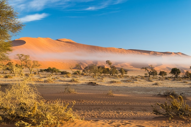 Acacia tressé et dunes de sable rouge.