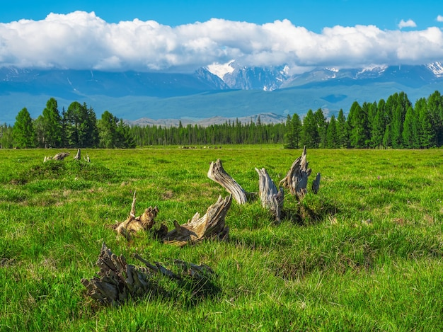 Des accrocs de forme bizarre sur une pelouse verte. montagnes géantes avec de la neige au-dessus de la forêt verte en journée ensoleillée. glacier sous ciel bleu. incroyable paysage de montagne enneigée d'une nature majestueuse.