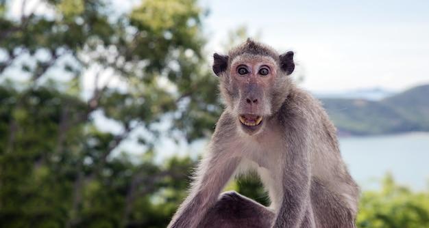 Action choquante de singe asiatique domestique