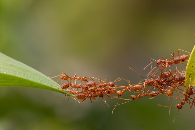 Action de fourmi debout. équipe de pont
