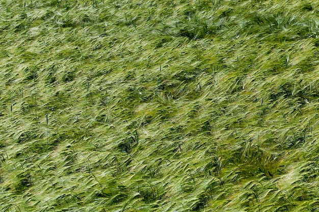 Activité agricole pour la culture du blé