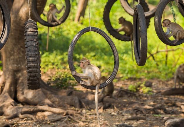 Les activités des petits singes par une journée ensoleillée
