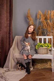 Adolescente avec des animaux domestiques, des chiens blancs et noirs. fille et deux chiens chihuahua à l'intérieur.
