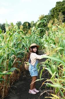 Une adolescente cueillant du maïs sucré sur un champ de maïs