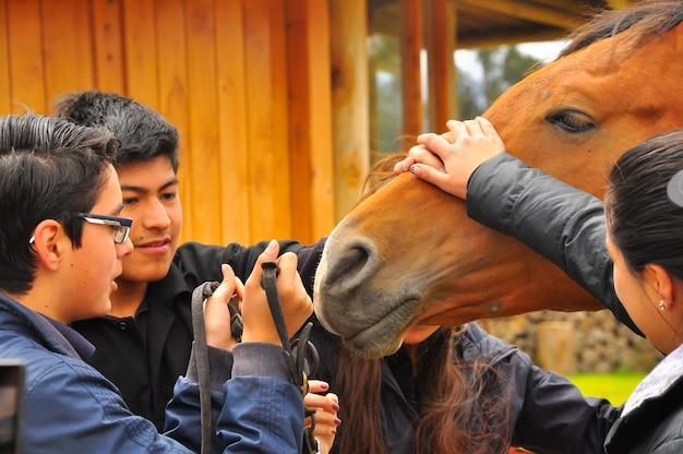 Les adolescents apprennent à connaître les chevaux. ecole d'équitation en equateur