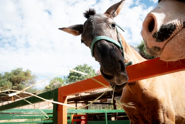 Adorable âne à l'extérieur à la ferme