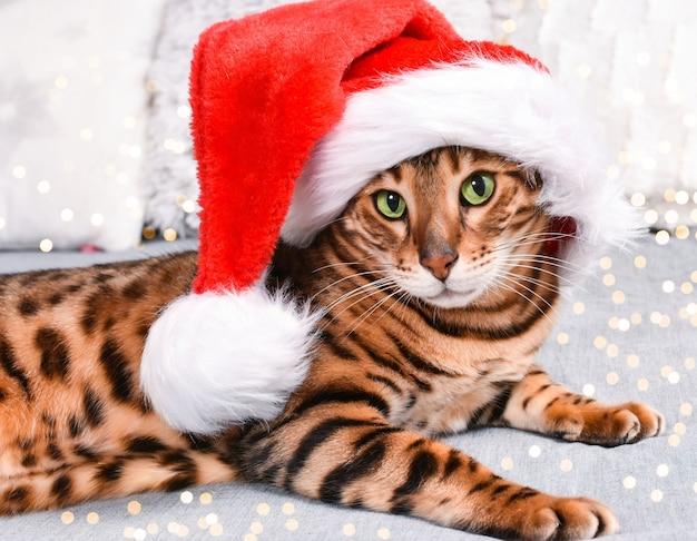 Adorable chat du bengale aux yeux verts et tacheté dans un chapeau de noël rouge allongé sur le lit en regardant la caméra sur fond gris. carte de voeux de noël.