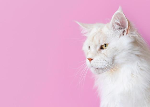 Adorable chaton blanc avec mur monochrome derrière elle