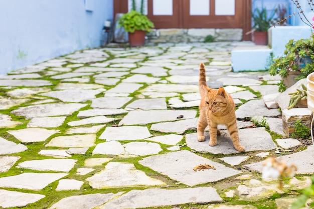 Adorable chaton rouge miauler à l'extérieur dans la rue