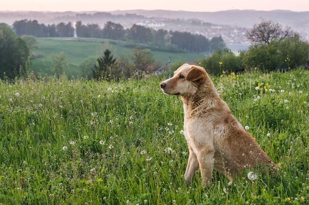 Adorable chien brun mignon