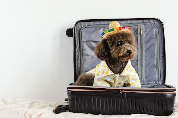 Un adorable chien caniche noir portant chapeau et robe tout en étant assis dans les bagages