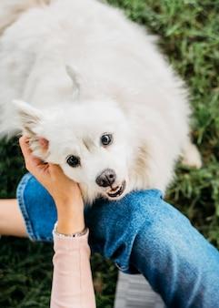 Adorable chien caressé par le propriétaire
