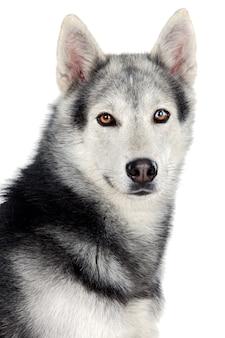 Adorable chien sur fond blanc