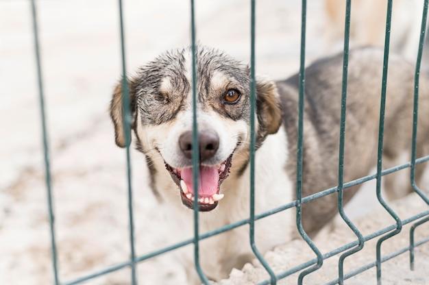 Adorable chien de sauvetage au refuge d'adoption derrière une clôture