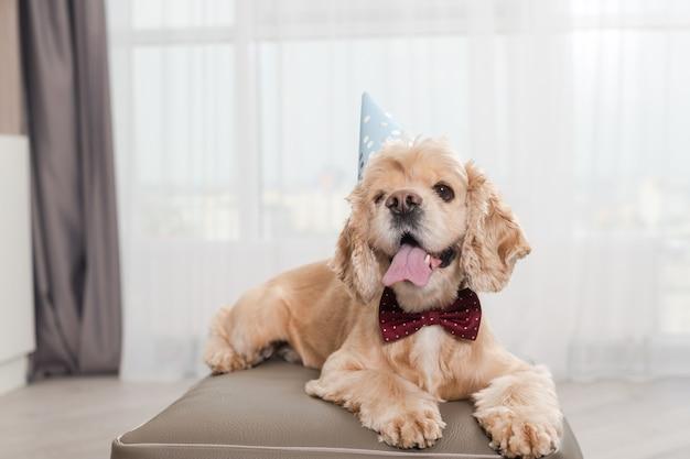 Adorable cocker au look d'anniversaire avec chapeau de fête et nœud de cravate rouge
