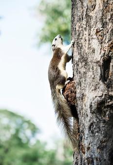 Adorable écureuil sur l'arbre