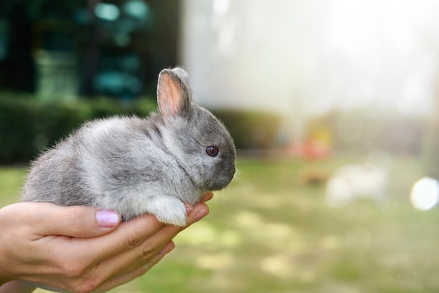 Adorable lapin déséquilibré dans les mains. mignon lapin se faire câliner par son propriétaire. concept de l'amour pour les animaux.